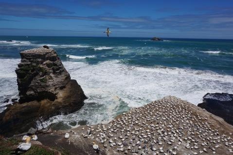 Muriwae Beach New Zealand - Theatress Travels