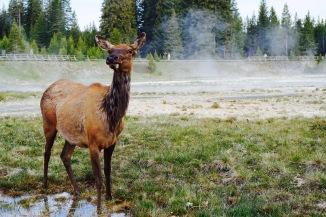Trek America Review - Mountain Trail - Theatress - Travel Blog 21